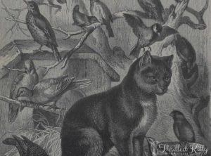'Die Vogelkatze' by Carl Gerber | Engraving | 1885