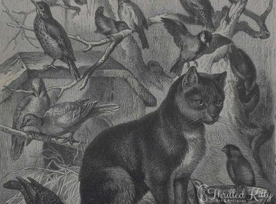 'Die Vogelkatze' by Carl Gerber   Engraving   1885