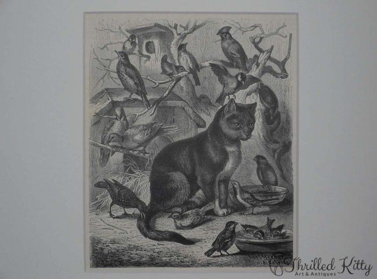 Die Vogelkatze by Carl Gerber-Engraving-1885-4