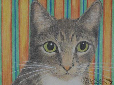 'Simon Kitty Cat' by Helen V James | Pencil