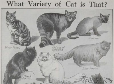 'What Variety of Cat is That?' Chart | 1930s
