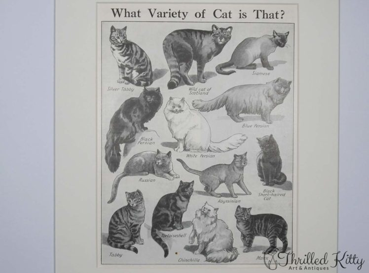 What Variety of Cat is That Chart-1930s-4