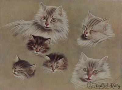 'Some Pussies' Heads' by Fannie Moody | Illustration | 1908