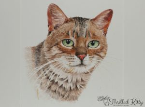 'Tabby' by Hazel K Adlam | Watercolour